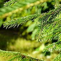 Woodstar Forestry